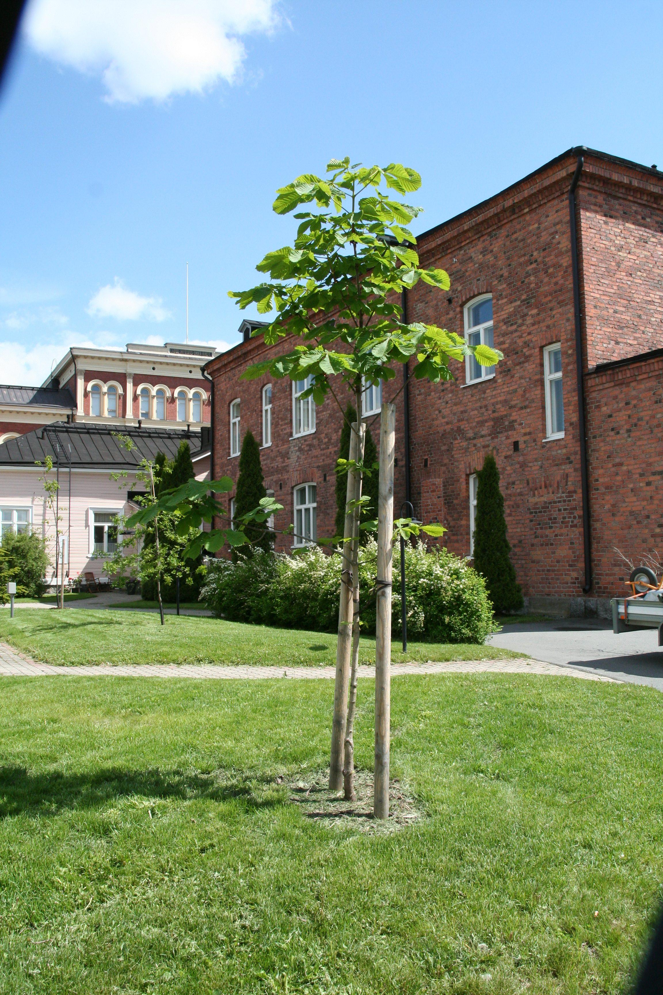 Taloyhtiön piha, Hämeenlinnan keskusta, 2016